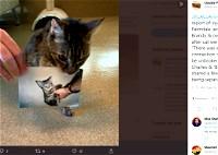 بعد 15 عامًا: قطة تعود إلى صاحبها!