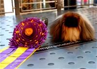 واسابي يفوز بمسابقة أفضل كلب