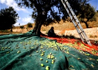 مستوطنون يهاجمون مزارعين فلسطينيين