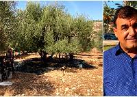 د. مازن العلي: احذروا الزيت المغشوش